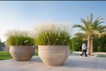 Garden ●  In  Pots / Pots that make an impact