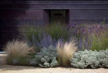 Gardening ● With Grasses / Uses of ornamental grasses