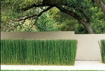 Gardening ● Contempary Styles / Planting with contemporary twist