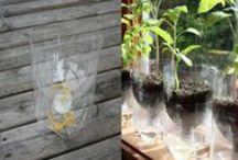 Ideas for our back garden...