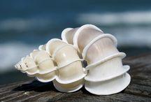 Sea shells / Every color, every shape...the beauty of shells!
