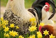 Farm & Country Animals