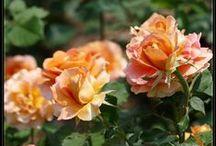 Gardens and Flowers / Gardens, Flowers and Garden inspirations