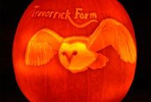 Pumpkin carving - Halloween / Pumpkin carving competition at Trevorrick Farm Holiday Cottages 2015