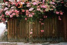 Flora / by Bianca Cash