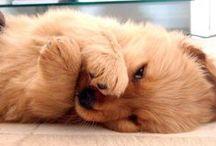 cuteness overload! / by Kelly Weber
