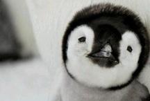PINguin / PINguin, ik heb er niets mee maar zijn 'voornaam' past perfect op een PINguin board :-)