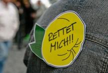 RETTET DIE QUITTE / Der Anfang vom Ende – der Ignoranz! Erhalten durch Aufessen war die Septemberkalte Devise unseres ersten aktivistischen Quittenauflaufs in München/Haidhausen. Enthusiastische Reden von Quitten-Amants Jason Liebling und Prof. Dr. Quincy Quittington erhoben die Stimme der Quitte zu einem gellenden Überlebensruf. Ja - die Quitte lebt! Belebt. Überlebt … God - save the Quitt! Klick-Tipp: http://www.der-ideenladen.cc/index.php/category/die-quitte/