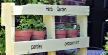 Garden Upcycling / Get crafty and upcycle old wooden pallets and fence panels into new uses for the garden