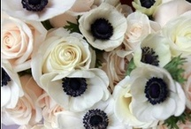 Flowers / by Malu Boutiques