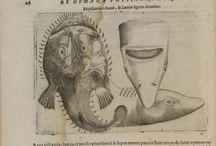 Io Batis, Portae, Neap. De humana physiognomia... 1702