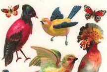 Birds! / I love birds!