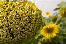 Bee Green / Helping keep Britain buzzing!