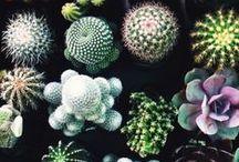 plant babies / by Erin Wanke