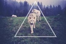 Photography - Animals