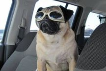 Pug Love / This board is dedicated to my 'pug neice' Lucy....I love you Lucy!!! / by Karilyn Jorgens