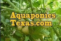 Aquaponics Texas / Grow food even in TEXAS Weather! www.AquaponicsTexas.com for info / by Aquaponics Texas