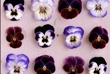 ::que des fleurs:: / by Meggie a pois