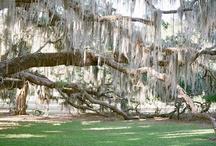 South Carolina / by Judy McCormick