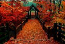 Autumn / by Lynn Langenfeld