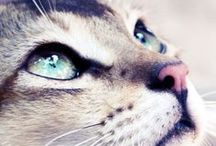 """CATS  { neko } / Guess what is my favorite animal ?  #chats #cats #animals #photography """"Viens, mon beau chat, sur mon coeur amoureux ; Retiens les griffes de ta patte, Et laisse moi plonger dans tes beaux yeux, Mêlés de métal et d'agate."""" Charles Baudelaire"""