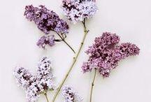 Flowers. / by Eryn .