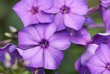 Flowers: nature's showoffs / by Elizabeth Andruska