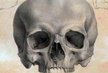 Skulls in print