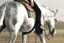 """""""The wind of Heaven is that which blows between a horse's ears."""" -Arabian Proverb / by Ashley Karr"""