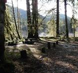 Camping in the PNW / camping, lifestyle, vegan, recipes, camp gear, camping tips