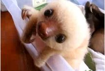 Aaah it's so fluffy I'm gonna die!!!! / Cute overload . dead . O_o / by Mandy Carvin
