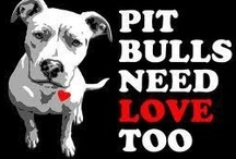 Beautiful Pitbulls & Other Misunderstood Breeds! / This Board features Pit Bulls & Other Beautiful Breeds and their Lookalikes that are UNJUSTLY Discriminated Against, Banned & Murdered For The Crime of Being Born! / by sherlocked221B