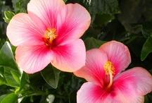 Beautiful plants / by Petra Naray