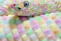 Pastels ByMAR