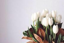 Pretty Petals / Flower power
