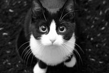 Feline Friendly / by Michele Drake