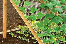 Gardening tips / by Jean Hunter