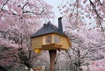 Tree Houses / Tree houses for your #kids #treehouse #niños #casadelarbol