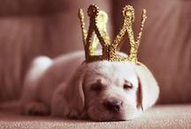 Lovely Animals / #animals #cute