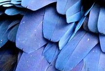 Color board - BLUE / This color (aka blue) gives peace, satisfaction and growth, which is conducive to health. Blue pieces >  http://applepiepieces.com/collections/blue