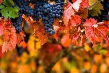 The beauty of fall :)