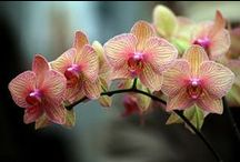 Orchid Care & More / by Michale Fredericksen-Kavan