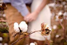 Cotton Field Inspiration