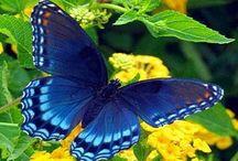Butterfly Art