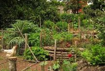 garden / One of my favorite places