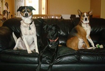Dog love / We have 5 dogs, whom are a huge part of our family. I also foster dogs that have been rescued. They all make my heart happy! / by Sharmon Noe