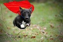 Pet Costumes! // Disfraces para mascotas / Get some ideas and dress up your pet with the most original costumes! // Consigue algunas ideas y disfraza a tu mascota con los disfraces más originales! #Dog #Cats #Pets #Costumes @Funidelia #macotas #perro #gato #disfraz / by Funidelia