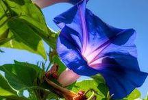Flowers / by Melissa Schiek