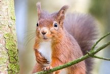 Squirrels are so darn funny (and cute) / by Gretchen Tsantles
