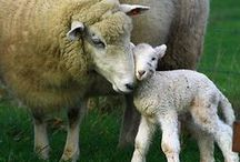Furry Moms and babies / by Melissa Schiek